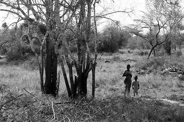 Bushen i Tanzania
