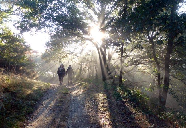 Morgenvandring på Caminoen