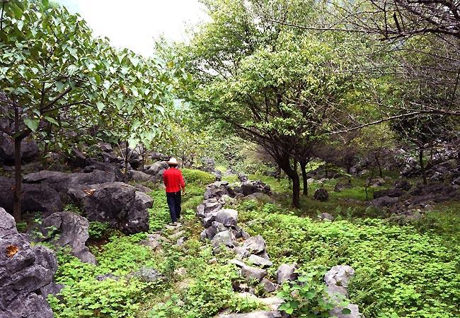 Gammel dame i naturen ved Langshi