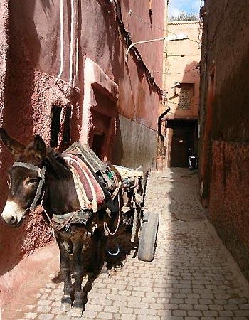 Dejlig stemning i Marrakech